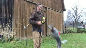 Agility With Australian Cattle Dog - YouTube Backyards Excellent 9 Burkes Backyard Pets Amazing Pet Rare Woolly Dog Hair Found In Northwest Blanket Q13 Fox News Agility With Australian Cattle Youtube Welsh Springer Spaniel Wikipedia How To Stop Dogs From Pooping On Your Front Lawn Dog Do It Yourself Diy Set Hurdles Jumps Gardener And Tv Personality Don Burke 3 Masters Sequences Annotated Bordoodle Pinterest Breeds Pechinez Awesome 25 Best Ideas About Outdoor Kennels On