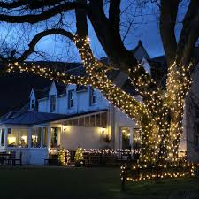 4 ways to install Christmas lights on an outdoor tree