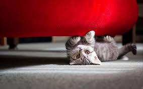 cat sofa cat sofa 6907257
