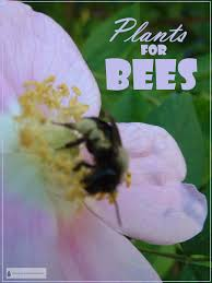 Attracting Insects To Your Garden by Plants For Bees Attract Pollinators U0026 Beneficial Insects For Nectar
