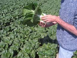 Apple Shed Inc Tehachapi Ca by Grower Map U2022 Earl U0027s Organic Produce
