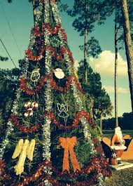 Pickle On Christmas Tree Myth by American History Finding Joy In Florida