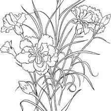 Flower Carnation And Cardinal Bird Coloring Page