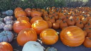 Celina Pumpkin Patch Directions by Fredrickson Farms Home Facebook