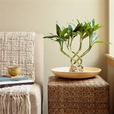 Plants In Bathroom Good For Feng Shui by The Essential Feng Shui Rules For Every Room