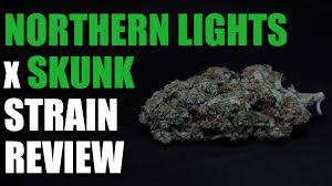 Northern Lights x Skunk 1 Strain Review Cannabis Lifestyle TV