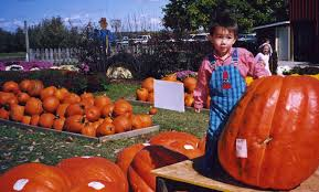 The Great Pumpkin Patch Arthur Il by Photographs From Arthur U0027s Early Life