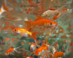 aquarium poisson prix prix poisson aquarium