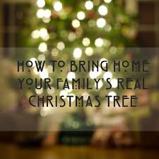 Best Live Christmas Trees For Allergies by How To Bring Home A Real Christmas Tree When You U0027ve Never Had One