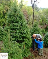Santa Cruz Mountains Christmas Tree Farms by A Little Bit Of The Outdoors Indoors Christmas Tree Chopping