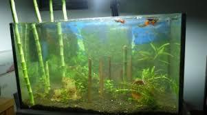 aquarium de 30 litres choix possible de la population de poissons