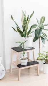 pin judyna christine auf plants in 2021 indoor