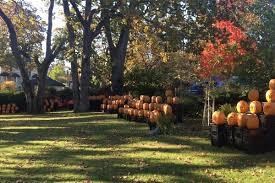 Pumpkin Head Urban Dictionary by Pumpkin Art On The Avenue Begins Tonight Oak Bay News