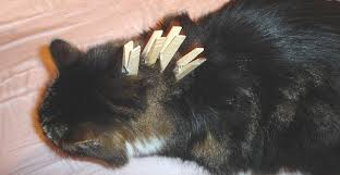 how to cut a cats nails how to deactivate i e calm your cat in seconds using