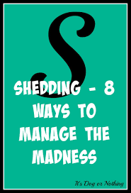 Do Treeing Walker Coonhounds Shed by Shedding 8 Ways To Manage The Madness Giveaway It U0027s Dog Or