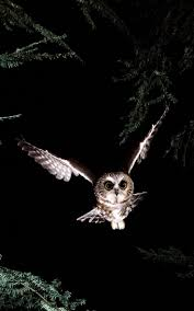 187 Best Barn Owls Images On Pinterest | Barn Owls, Nature And ... 3716 Best All About Owls Images On Pinterest Barn Owls Nature Winter Birding Guide Lake Champlain Region 53 Flight At Night Owl Species Farm House England Stock Photos Images 1538 Owls Photos Beautiful Birds 2552 Give A Hoot Children Large White Carraig Donn Mayo Sghilliard Glass Studio Little Opens In Westport Food Drink Nnecticutmagcom 250 Love You Always