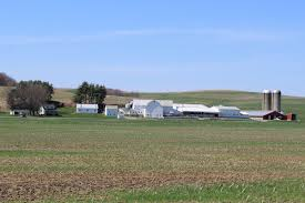 Gust Brothers Pumpkin Farm by Specht Dairy More Space Plus Good Management Equals More Milk
