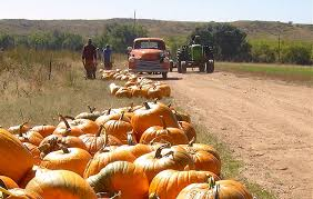 Pumpkin Patches Around Colorado Springs by Hands On Tours And Experiences Visit Colorado Springs Blog