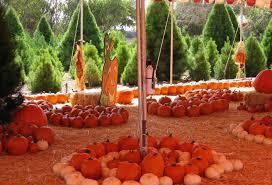 Pumpkin Patch Irvine University by Pumpkin Patches Orange County California Travelingmom