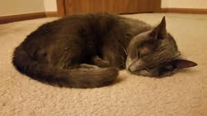 Luckys Bed And Biscuit by Cat Welfare Ohio Happy Homes