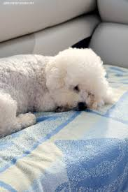 Do Jackie Bichon Shed by Weekend Waterview U2013 Home Is Where The Boat Is