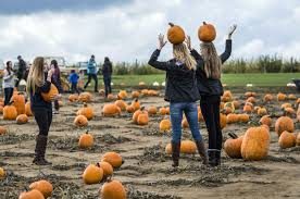Sunnyside Pumpkin Patch by The 7 Where To Go And What To Do In Green Bluff In October The