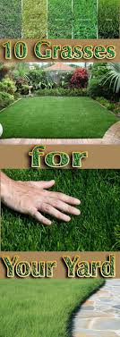 Best 25+ Grass Ideas On Pinterest | Planting Grass Seed ... 25 Trending Lawn Seed Ideas On Pinterest Repair The Beer Portfolio Mowing Ferlization Treatment Pauls Best Goodbye Grass 7 Inspiring Ideas For A No Mow Backyard Artificial 12 Stunning Modern Itallations Install Balinese Garden Bali What Is Carpet How To Grow Things Consider Before Use Edging To Keep Weeds And Away From Flower Beds Hgtv Front Yard Landscape No Grass Pinteres Dwarf Mexican Feather Google Search Desert Landscape Outgrowing The Traditional Scientific American Blog Restore With Dead Soil After 9 Steps