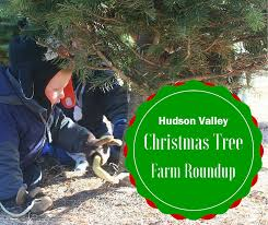 Christmas Tree Baler by Christmas Tree Farms Of The Hudson Valley