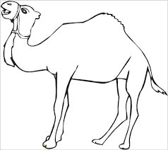 Dromedary Camel Coloring Pages