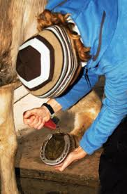 Best Horse Shedding Blade by A Grooming Guide To Cleaning Your Horse Expert Advice On Horse