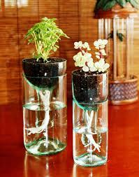 Best Plants For Bathroom No Light by Bathroom Design Amazing Griselinia Hedge Goodluck Plants Best