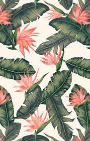 flowers fondos iphone pineapple tropical tumblr wallpaper