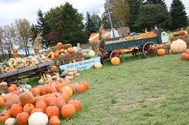 North Lawrence Pumpkin Patch by Northeast Ohio Fall Festivals And Pumpkin Patches