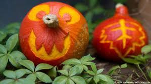 Largest Pumpkin Ever Carved by Biggest Pumpkin In Germany Crowned At Ludwigsburg Pumpkin Festival