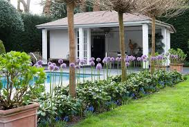 allium purple sensation a new gardening trend farmer gracy s