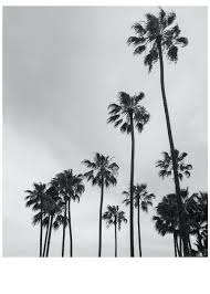 California Palm Trees No 1 Images Beaches Wallpaper