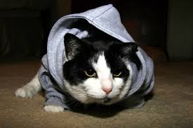 cat hoodies the top five best selling cat hoodies on the market right now