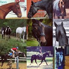 Yorktown Stables - Home   Facebook Urgent Care In The News Yorktown Heights Ny Afc Morristown Girls Lacrosse Dominates 163 Semifinal Win Over League In The Crease Featuring New York Fight Attacker Sammy Jo Tracy Battle Surrender British General Charles Stock Lakeland Sports Keland_sports Twitter My Copycat Pottery Barn Wall Gino Bello Homes Town Hall To Be Renovated Accommodate Handicapped Media Qa With Espn Lacrosse Analyst Paul Carcaterra