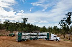 100 Livestock Trucking Companies Smithfield Cattle Co Consulting Logistics