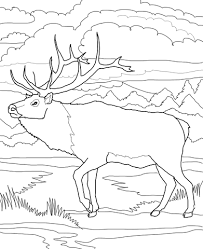 Click To See Printable Version Of Woodland Caribou Coloring Page