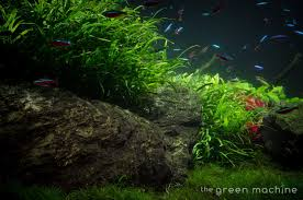 Huge Aquascape Tutorial Step By Step- Spontaneity By James Findley ... Awesome Aquascaping Gallery Iiac European Aquascape Channel Aquascapes Homedesignpicturewin Aquascaping Tutorial Aqurios Para Decorao Pinterest Big Tutorial Guide Continuity By James Findley The Indonesia Green Machine Ada Aquarium Acuarios Aquariums Best Of Aquascapes Fabuluxedecor Natural Iwagumi Scottish Grass Size 40x25h Lab Undergrowth Wood Tank 130l Aquadesign