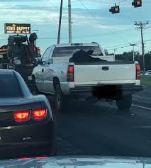 100 Cow Truck Only In Texas Would You See A Cow Riding In The Back Of A Truck