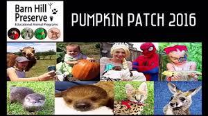 Pumpkin Patch Louisiana by Barn Hill Preserve U0027s Annual Pumpkin Patch 2016 Youtube