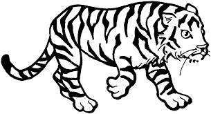 White Tiger Coloring Pages 18 Simple With Picture Of 3 3051