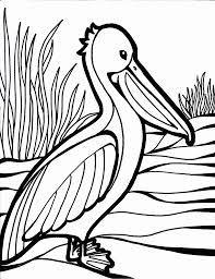 Bird Coloring Pages 4