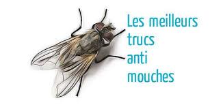 piege a mouche exterieur trucs anti mouches astuces de grand mère