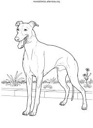 Free Dog Breed Coloring Pages