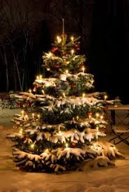 Aspirin For Christmas Tree Life by 177 Best Christmas Trees Images On Pinterest Christmas Time