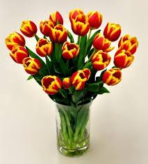 tulips tulips multi color tulips