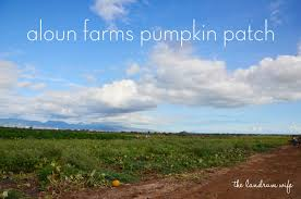 Aloun Farms Pumpkin Patch Address by And Drink The Wild Air Getting To Know Hawaii Aloun Farms